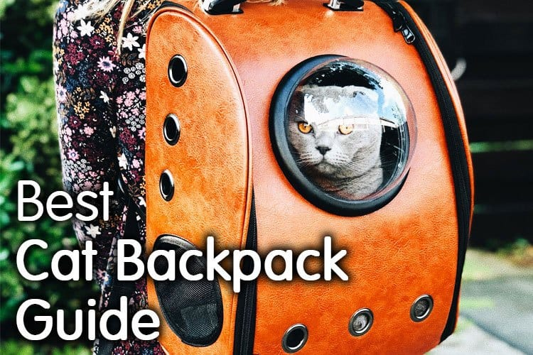 The Best Cat Backpack Carrier Guide For 2020 | Complete