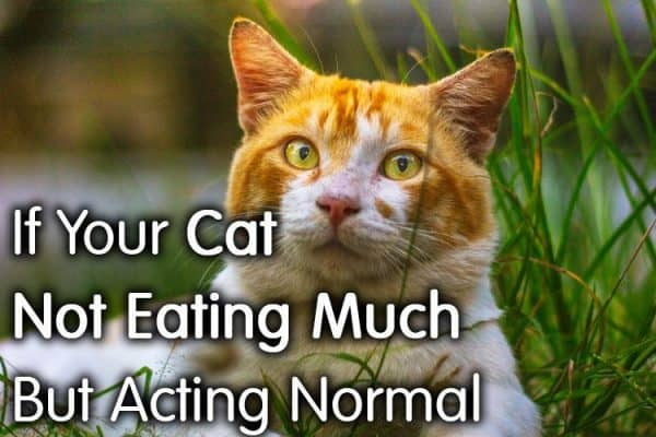 Cat Not Eating Much But Acting Normal