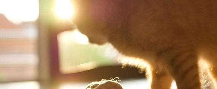 What can be the causes of a sensitive stomach in cats