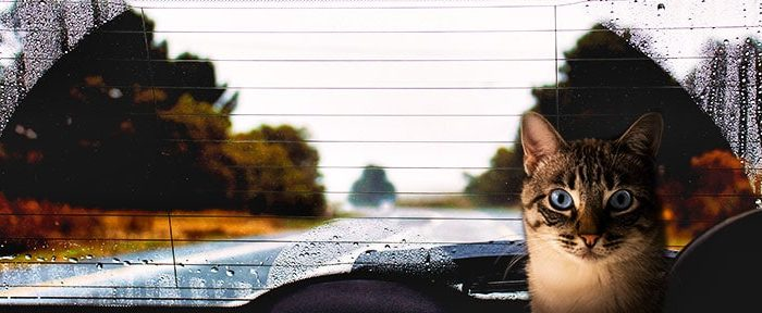 cat inside car