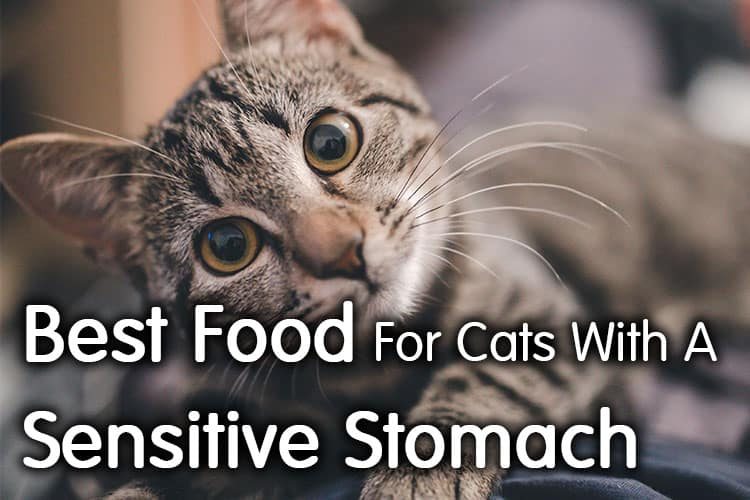 Best Food For Cats With A Sensitive Stomach