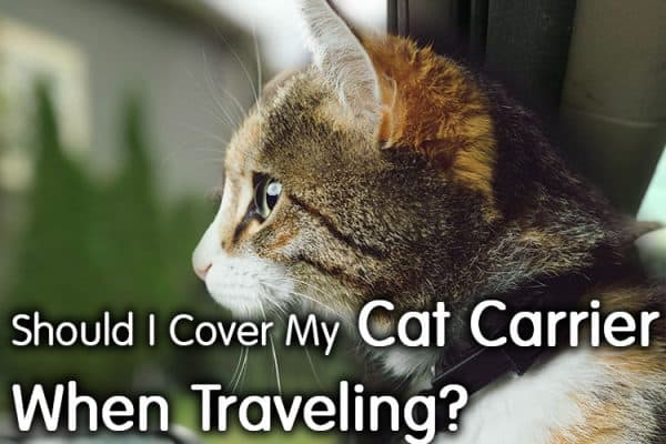 Should I Cover My Cat Carrier When Traveling