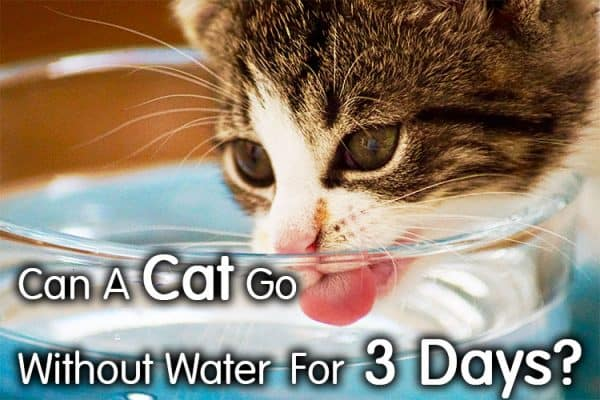 Cat Without Water For 3 Days