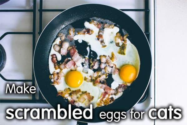 How To Make Scrambled Eggs For Cats