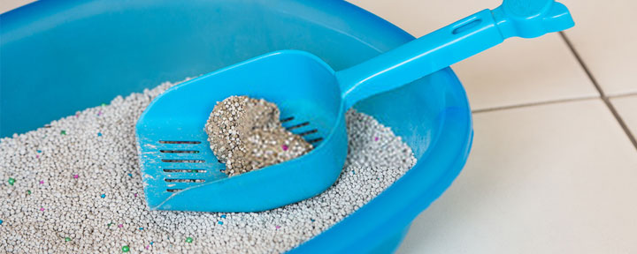 flushable cat litter septic safe