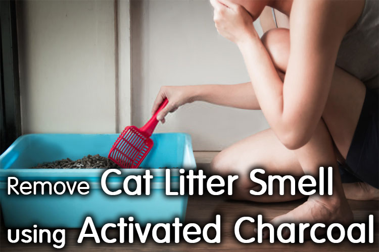 Best Way To Remove Cat Litter Smell Using Activated Charcoal