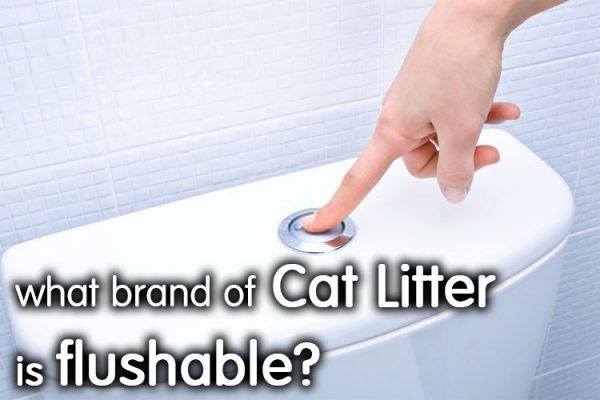 What Brand Of Cat Litter Is Flushable