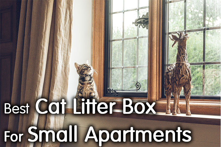 Best Cat Litter Box For Small Apartment