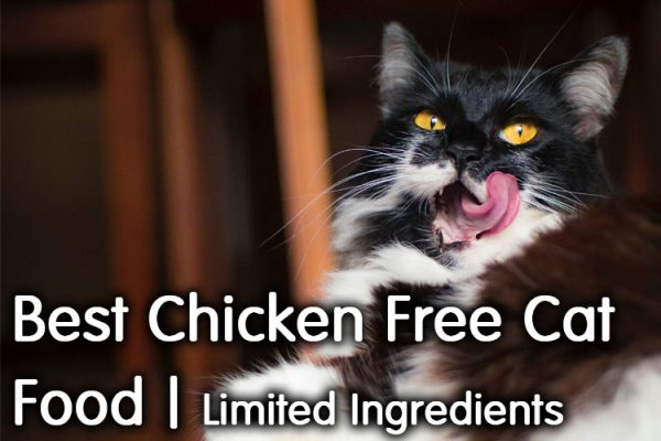 Best Chicken Free Cat Food