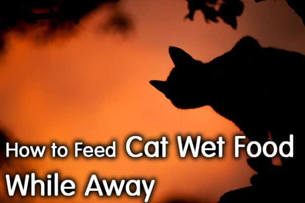 How To Feed Cat Wet Food While Away