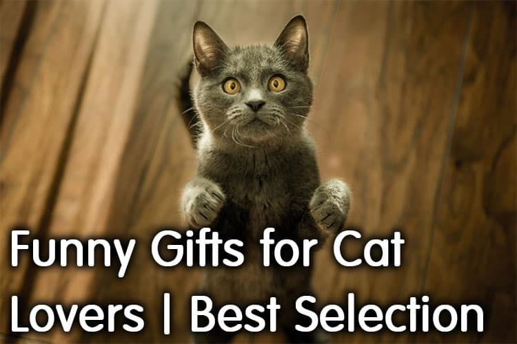 Funny Cat Gifts Amazon