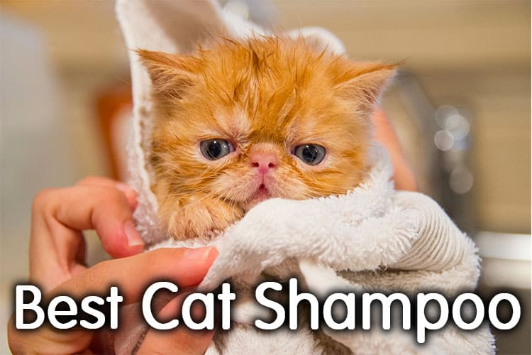 The Best Cat Shampoo Review 2020 | Definitive Guide