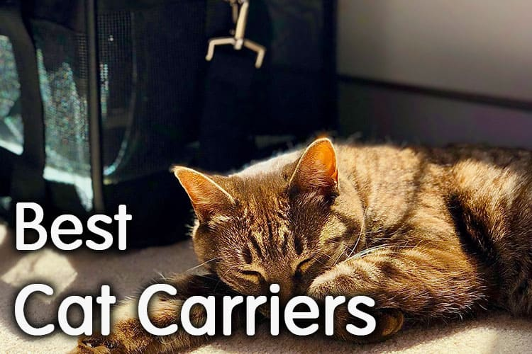 The Best Cat Carrier Review 2020 | Researched