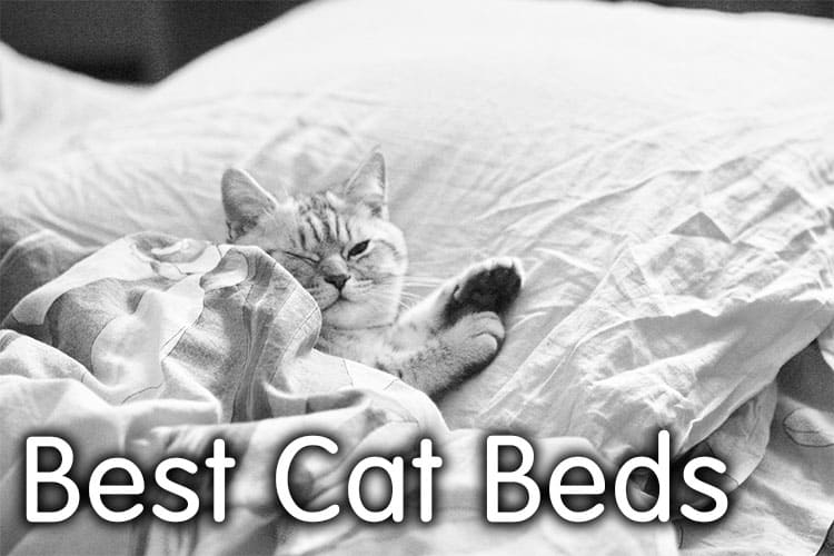 The Best Cat Beds Review 2020 | Definitive Guide