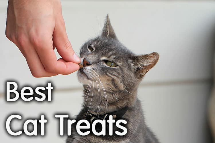 Best Cat Treats Review