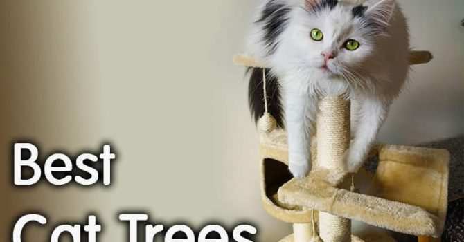 Best Cat Trees Review