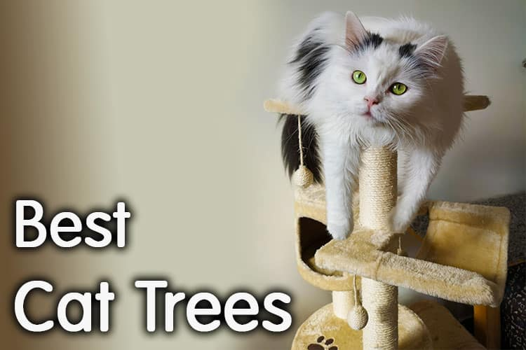 The Best Cat Trees Review 2020 | Way To Happy Cat