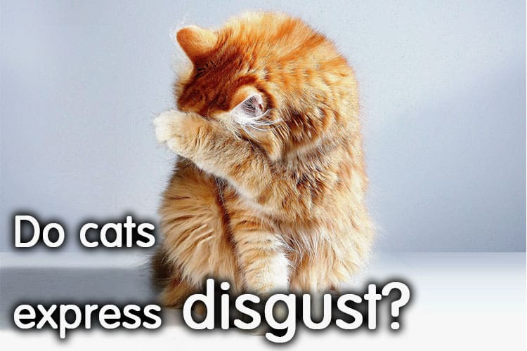 Do Cats Express Disgust