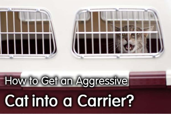 How To Get An Aggressive Cat Into A Carrier