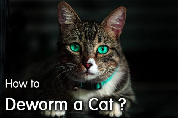 How To Deworm A Cat