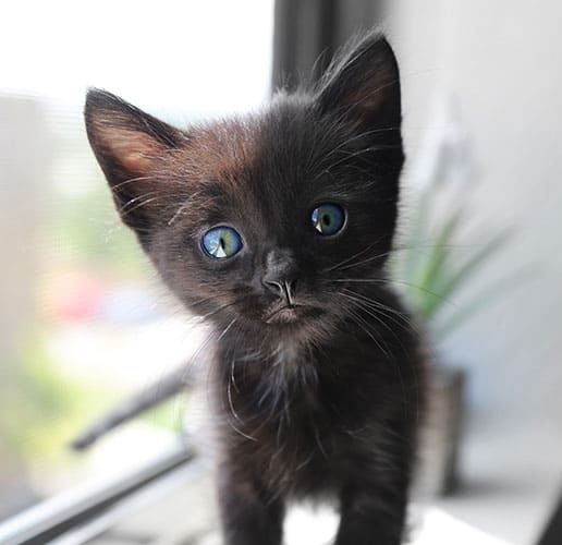 black cat with blue eyes meaning