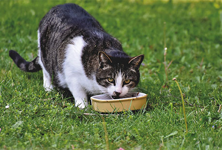 cat eating green beans to reduce weight