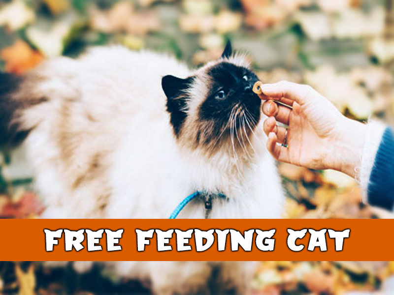 Ultimate Guide to Free Feeding Cats