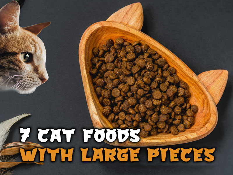 7 Best Cat Foods with Large Pieces: Brand Review Included