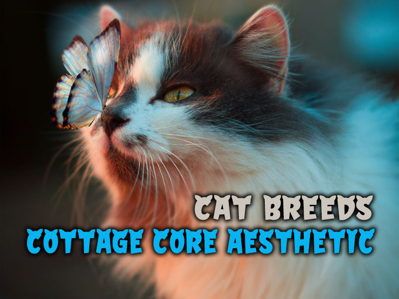What cat breed fits the Cottage core aesthetic