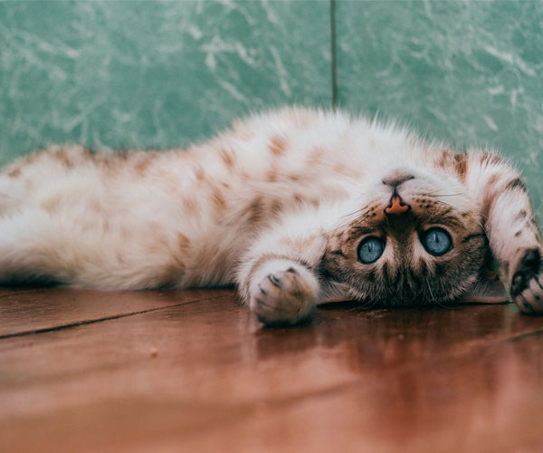 Accidentally Stepped on Cat: What to do & How to Avoid